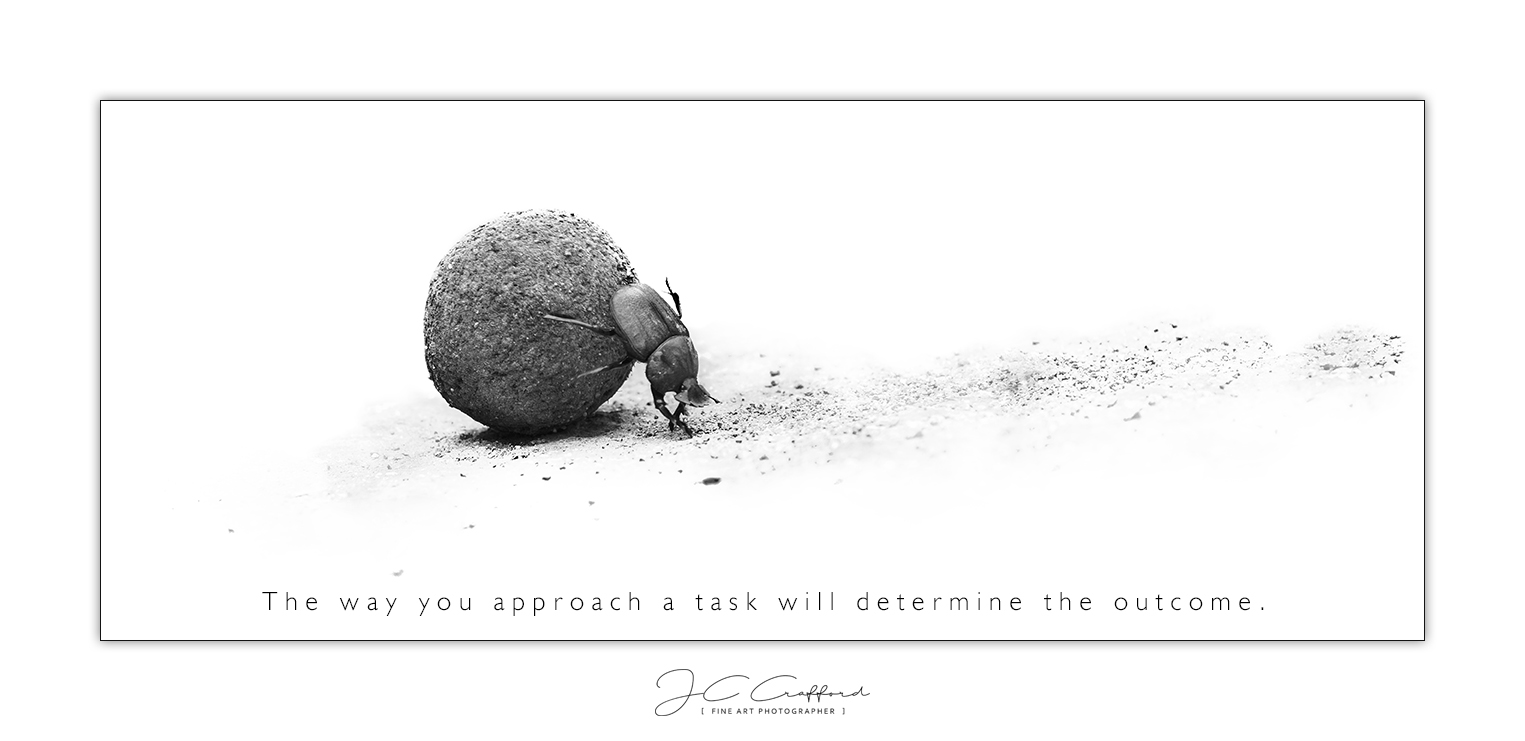 Approach a task like a dung beetle.